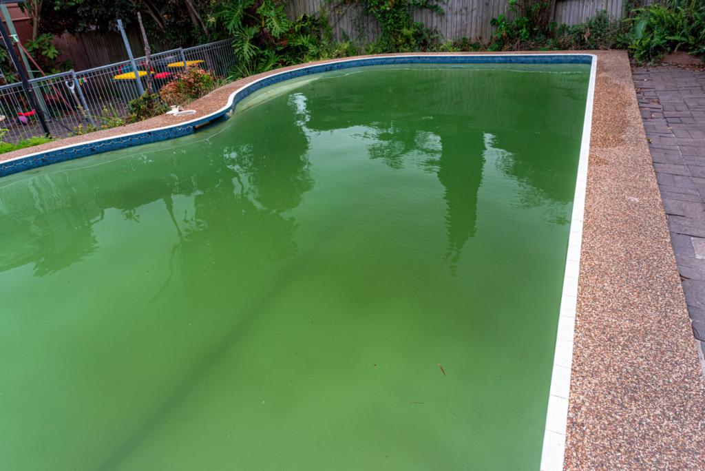 Ein typisches Bild für einen Pool, der mit den grünen Algen befallen ist.